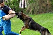 Jak wyszkolić psa