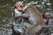 Małpi rozum