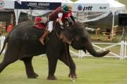 Polo na słoniu