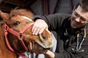 Człowiek vs koń