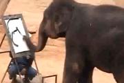 Autoportret słonia