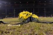 Szwedzi zdemolowali stadion
