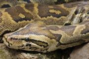 Nieudany przemyt węży