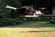 Struścopter