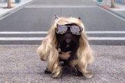 Pies - celebryta