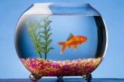 Ryba na kółkach