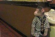 Kayabukiya Tavern - małpia restauracja