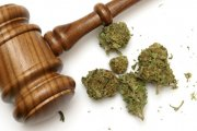 Legalna trawka = mniejsze bezprawie