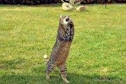 Kot dostawca zioła