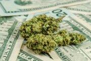 Diler zgłosił kradzież marihuany