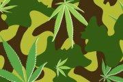 Armia będzie uprawiać marihuanę!