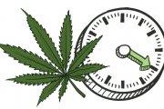 Jak długo THC utrzymuje się w krwi?