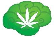 Marihuana a inteligencja