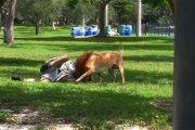 Pies-lew straszył przed psem-pająkiem Wardęgi