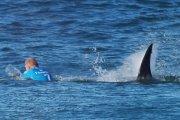 Surfer kontra rekin [WIDEO]