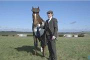 Koń w garniturze