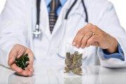 Lecznicza marihuana już refundowana w Polsce
