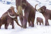 Wielki powrót mamutów