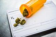 Cannabis powstrzymuje przed braniem cięższych narkotyków