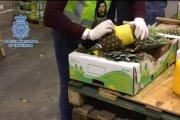 745 kg kokainy w ananasach