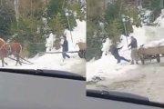 Woźnica znęcał się nad koniem - zwierzę obronił przypadkowy facet
