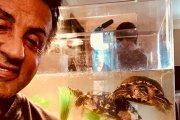 """Żółwie Sylvestra Stallone'a z pierwszego """"Rocky'ego"""" wciąż żyją. I wystąpią w """"Creedzie 2""""!"""