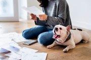 Masz psa? Pamiętaj o podatku