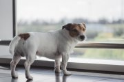Pies dostał odszkodowanie za opóźniony lot. Sprawdź, czy ty też możesz