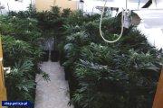 Narkotykowe wojny: Przebudzenie mocy. Przejęto towar wart ok. 90 mln zł