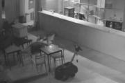 Włamali się do restauracji. Gdy zobaczyli policję, zaczęli... chrapać