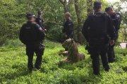 Policja prowadziła obławę… na rzeźbę tygrysa