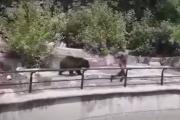 niedźwiedź zoo