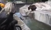 niedźwiedź w zoo