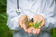Eksperymentalny plan legalizacji marihuany