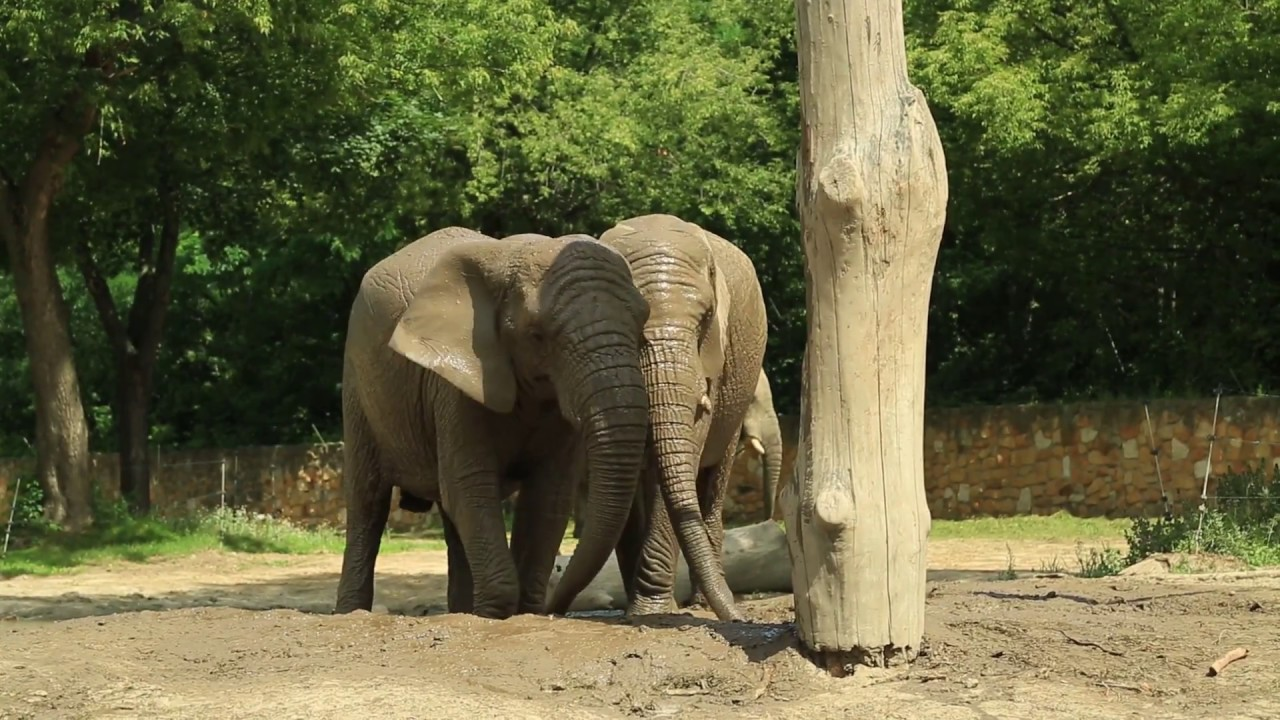 słonie.jpg