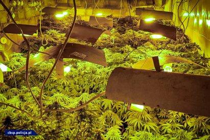 /lifestyle/obok-domu-mial-podziemna-plantacje-marihuany,24556,1,a.html